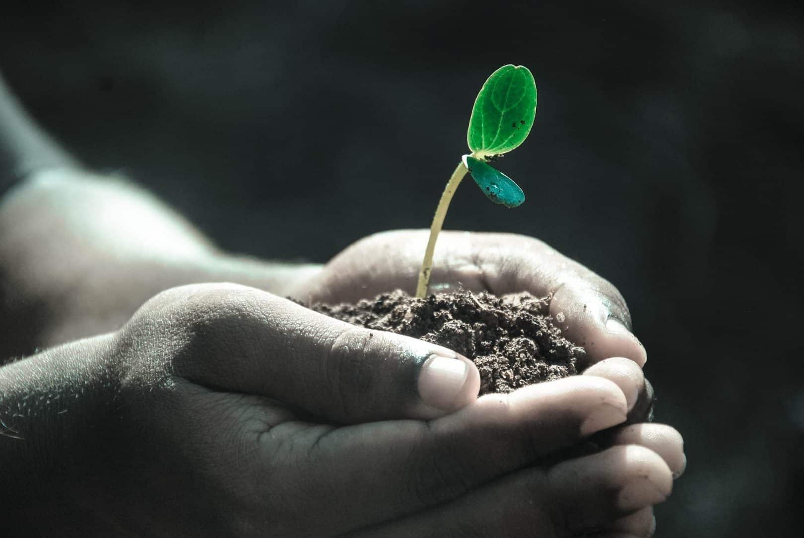 «L'esprit des plantes» possèdent-elles une intelligence ?