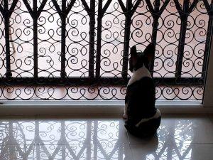 Un chien qui sait quand son maître va rentrer