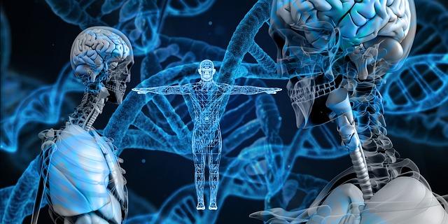 Télomères: notre durée de vie au cœur de notre ADN