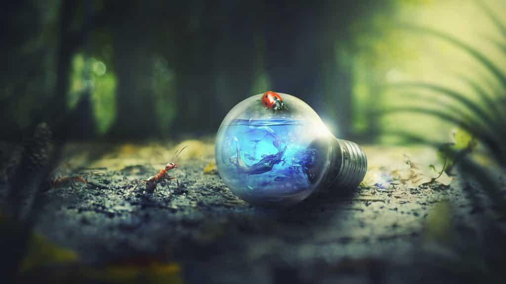 articles, livres et documentaires sur la Nature Environnement