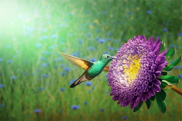 Les oiseaux perçoivent des couleurs inimaginables pour l'homme.