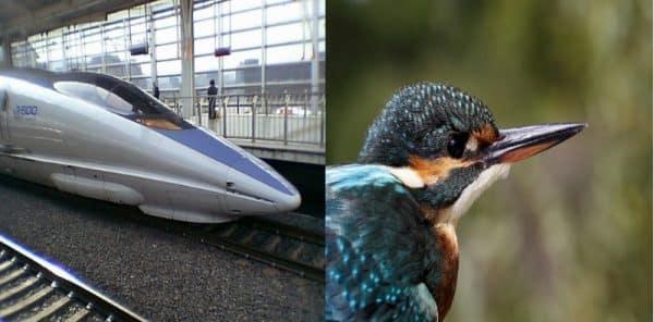 biomimétisme entre train et martin pêcheur