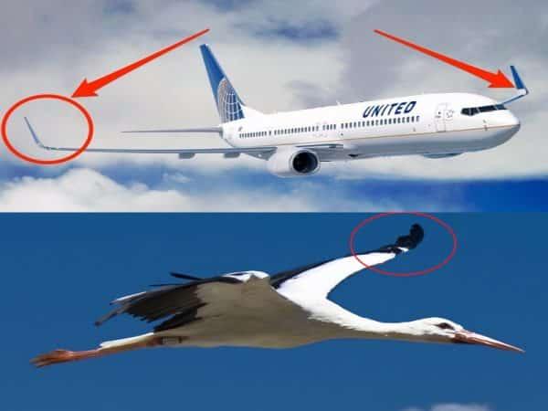les ailettes sur le bout des ailes est inspiré des ailes de cigogne