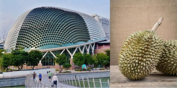 biomimétisme architecture