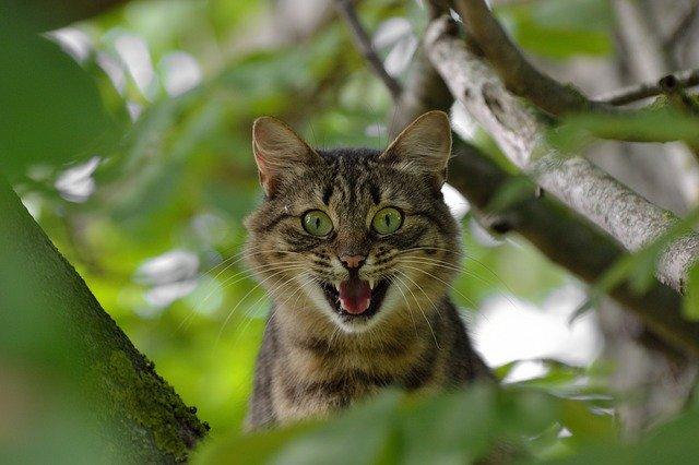 lien chat et schizophrénie