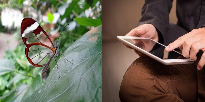 Biomimétisme, ailes de papillon et écran anti reflet
