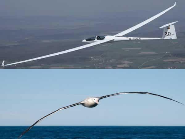biomimétisme albatros et planeur