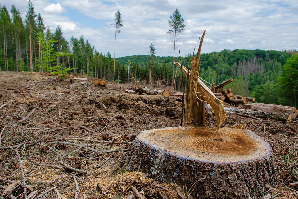 l'extinction de l'humanité causé par la déforestation