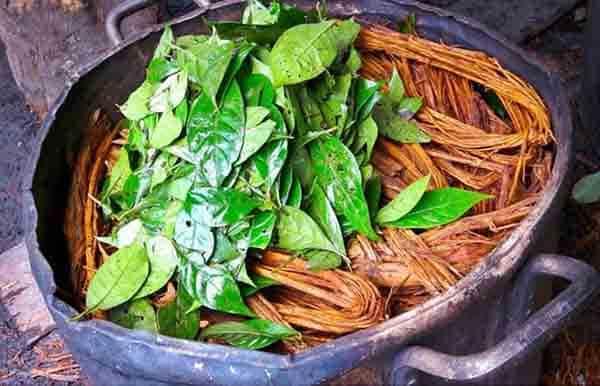 Préparation ayahuasca
