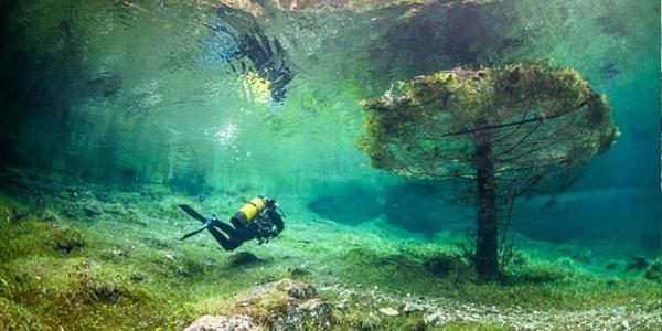 Cet arbre sous l'eau offre un paysage sous-marin surprenant