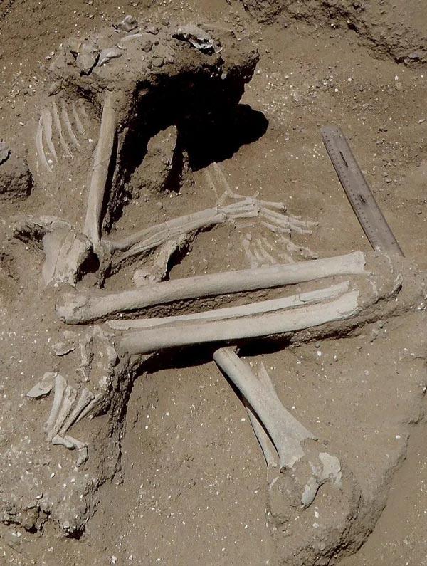 découverte archéologique macabre d'une femme torturé