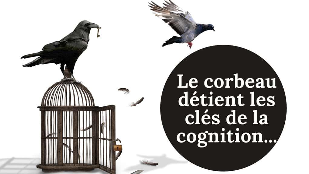 L'intelligence des corbeaux, Vous ne les regarderez plus jamais du même oeil
