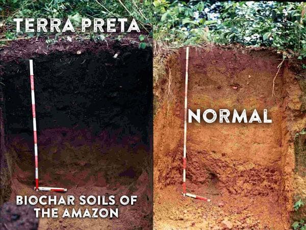 différence entre terre classique et Terra preta