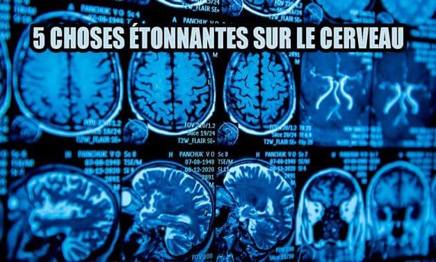 5 choses étonnantes à savoir sur le cerveau.