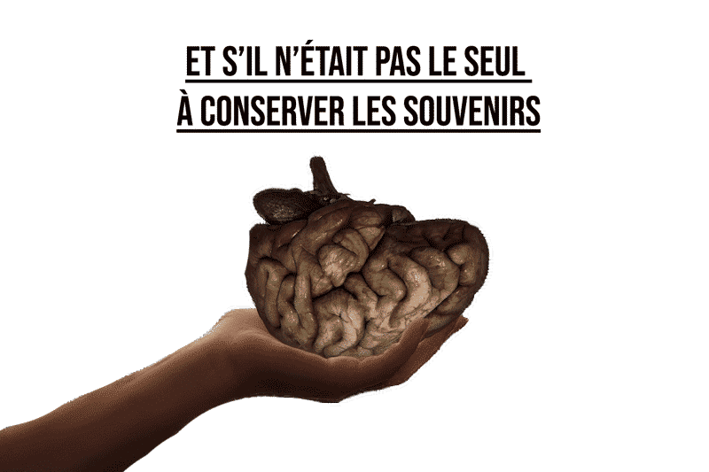 La mémoire sans cerveau illustration
